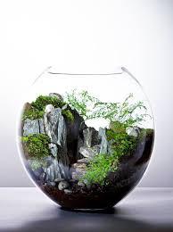 340 best mini indoor garden images on pinterest terrariums
