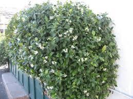 trees vine producing plant info atascadero ca