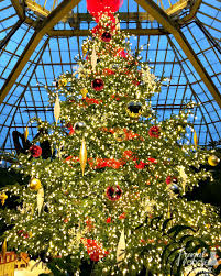 phipps conservatory christmas lights frugal foodie mama 5 festive reasons to visit pittsburgh during the
