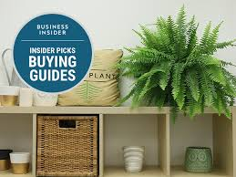 the best houseplants you can buy online that are super easy to
