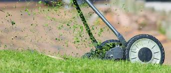 lawn care tips for eco friendly turfgrass and yard care mwmo