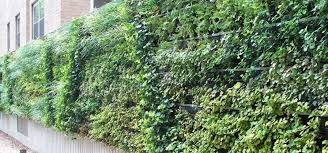 8 ideas to inspire your first living wall essential home and garden