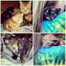 help my kittens have disappeared the cat site