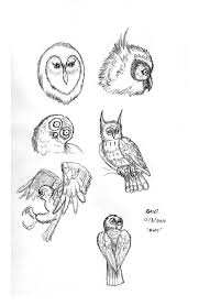 owl sketches by rendragonclaw on deviantart