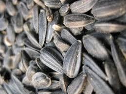 black bird seed birds of prey