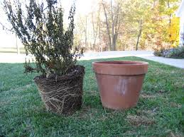 fall outdoor container gardening best container gardening ideas