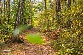 s chsische k che wallpaper sunlight canon phone wilderness dresden elbe