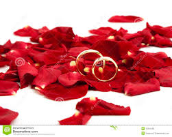 red rose rings images Golden wedding rings on red rose petals stock image image of jpg