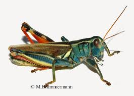 arizona beetles bugs birds and more december 2014