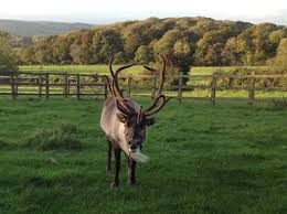 christmas tree farm launches in exeter the exeter daily