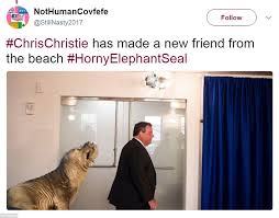 Horny Girl Meme - chris christie is roasted in hilarious beachgate memes daily