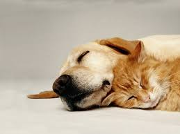 dogs and cats for free hd cat dog download hd wallpapers pictures