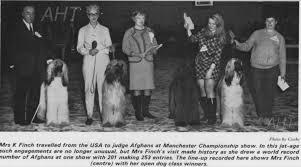 afghan hound racing uk afghan hound times kay finch crown crest afghan hounds usa