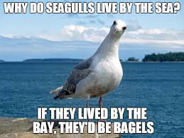Finding Nemo Seagulls Meme - list of synonyms and antonyms of the word seagull meme