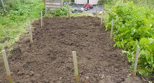 Strawberry Bed How To Grow Strawberries Love2learn Allotmenting