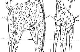 realistic animal coloring pages just colorings