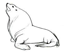 draw sea lion