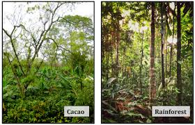 native rainforest plants rainforest data nuggets