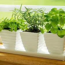 Winter Indoor Garden - grow a winter herb garden easy indoor garden