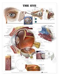 anatomy study tools images learn human anatomy image