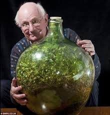 Sealed Bottle Garden | the sealed bottle garden still thriving after 40 years without fresh