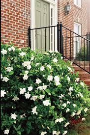 Gardinia Home Decor The Complete Guide To Gardenias Southern Living
