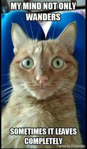 Birthday Meme Cat - cat lady birthday memes meme pinterest rhpinterestcom time to see