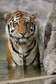 Unusual House Names 80 Tiger Names U0026 Meanings Hubpages