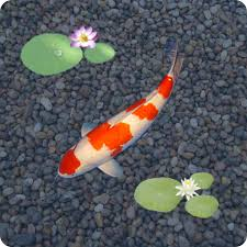 koi live wallpaper version apk free anipet koi live wallpaper appstore for android