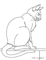 imagenes de ratones faciles para dibujar dibujos para colorear un gatito con un ratón es hellokids com