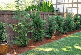 How To Make Backyard More Private Captivating How To Make Backyard More Private Photos Best Idea