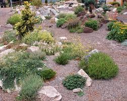 some good information about rock garden plants for better gardener