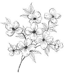 best 25 dogwood flowers ideas on pinterest dogwood tattoo