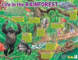 Tropical Rainforest Plant Species List - tropical rainforest plants wikipedia home design u0026 interior design