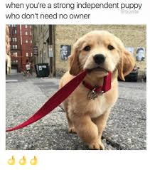 Puppy Meme - when you re a strong independent puppy a bustle who don t need no