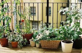Small Urban Garden - easy and inexpensive urban garden designs