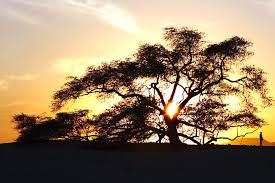 tree of life story of tree of life tree of life
