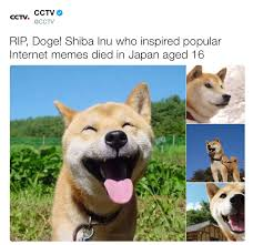 Doge Know Your Meme - doge rip doge know your meme