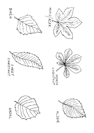 Coloring Pages Of Leaf Shapes | labeled tree leaf shapes thanksgiving pinterest outlines tree