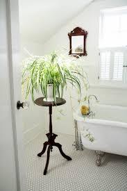 gräser pflanzen hübsche arten für innenbereich u0026 balkon