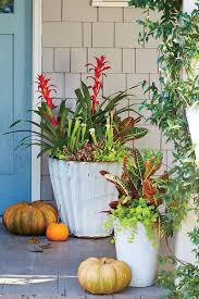 Plant Combination Ideas For Container Gardens - 1384 best container gardens images on pinterest