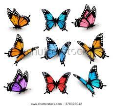 vector butterfly free vector stock graphics images