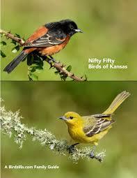 Kansas birds images Birds of kansas jpg