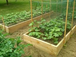cucumber trellis will make using new bamboo stakes gardening