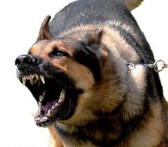 Barking Dogs Web version Layout 1
