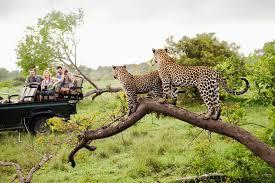 african safari animals an introduction to africa u0027s big five safari animals