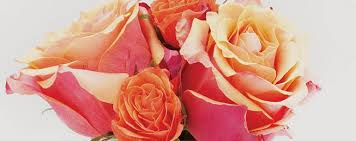 multicolored roses what do your roses best market