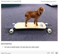 Funny Skateboard Memes - untitled