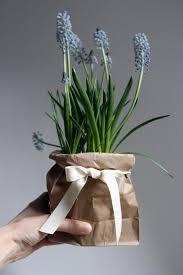 Unique Plant Pots Best 25 Plastic Plant Pots Ideas On Pinterest Lemon Tree Plants