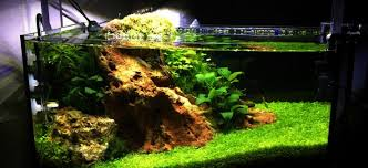 Aquascape Moss Planted Tank Project Mini Bow By Zac Morris Aquarium Design